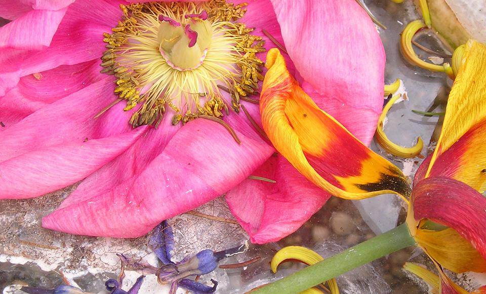 images_bloemhoningvruchtfotos006_web
